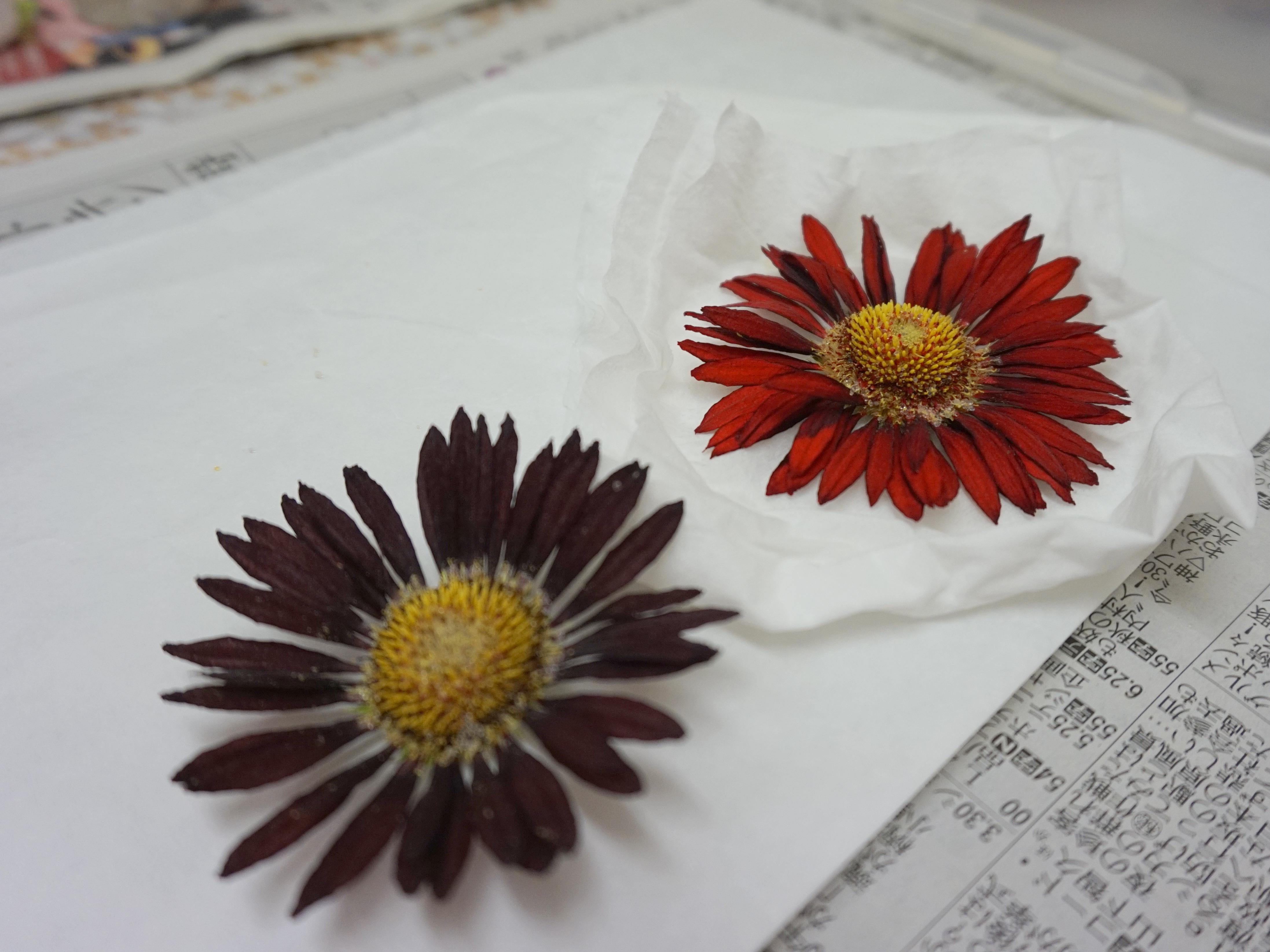 赤花処理 レカンフラワー乾燥材での処理