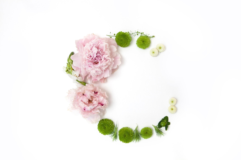 芍薬花言葉